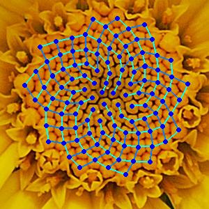 Fibonacci Chamomile Amazing photo | Cauliflower