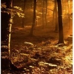 iPhone 4 Wallpapers golden forest 150x150 iPhone 4 Wallpapers