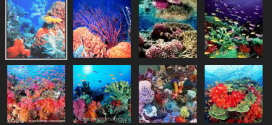 Google Street View in the Great Barrier Reef
