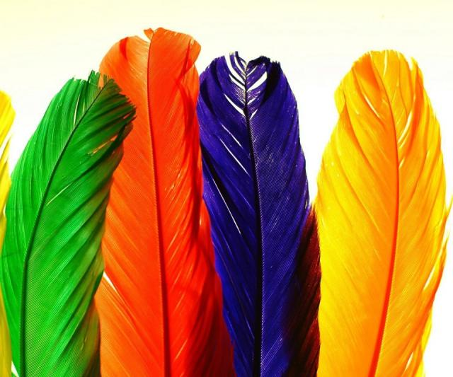 Colorful Feathers Android Wallpaper