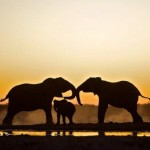 Elephant Family Picture 150x150 Nature Photos